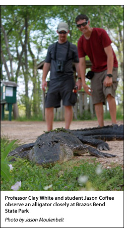Professor Clay White and student Jason Coffee observe an alligator closely at Brazos Bend State Park
