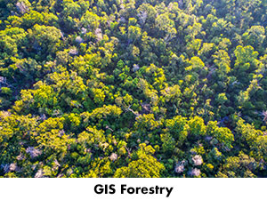 GIS drone's aerial view of forest