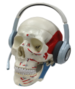 anatomy skull with headphones