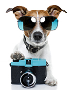 dog wearing sunglasses and with a camera
