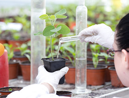 Woman watering plant in lab